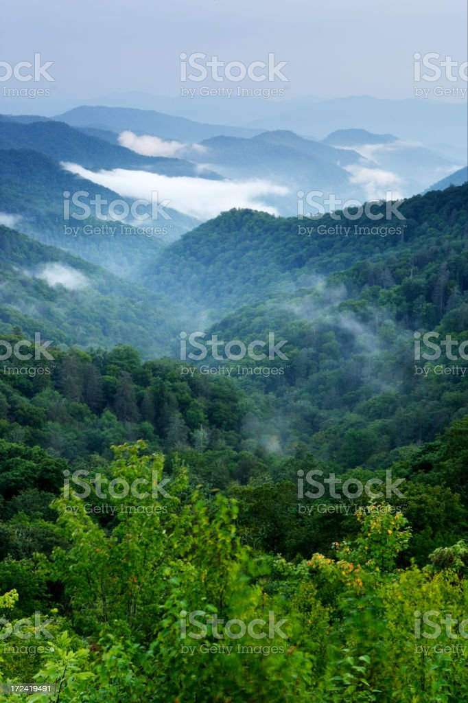 The green forests and white fog of the Smoky Mountains stock photo
