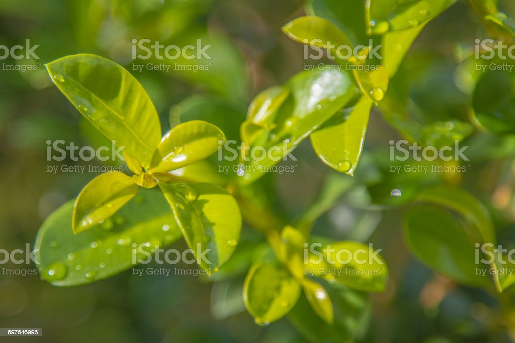 The green leave. stock photo