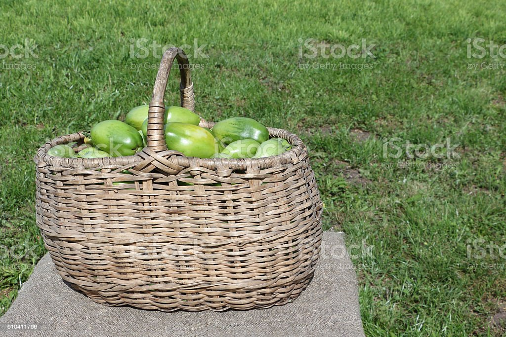 The green tomatoes  in a basket on a table outdoors stock photo