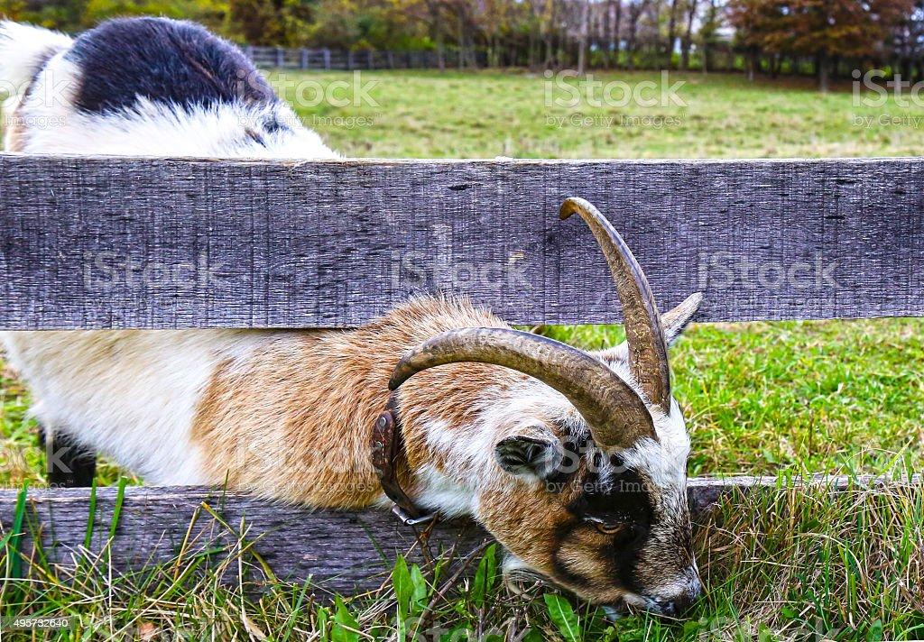 The Greener Grass stock photo