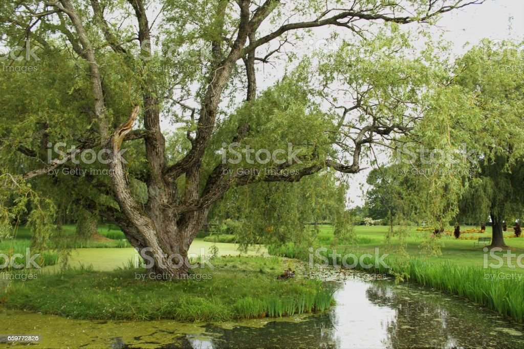 The Greens of Grand Pre stock photo