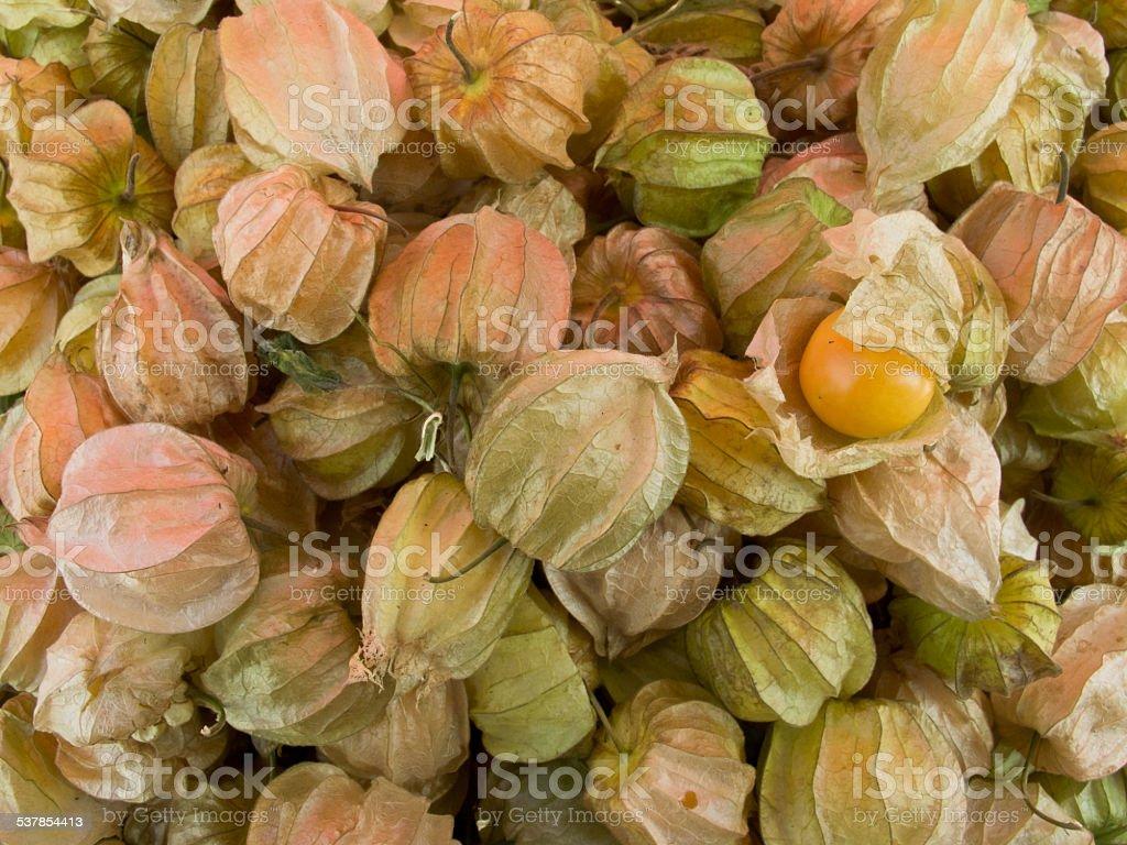 Grupa Cape gooseberry lub Physalis peruviana. Tajlandia zbiór zdjęć royalty-free
