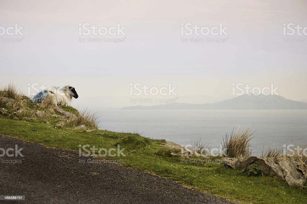 The guardian of Ireland, Achill Island stock photo