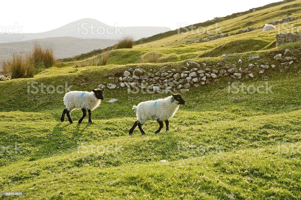 The guardians of Ireland, Achill Island stock photo