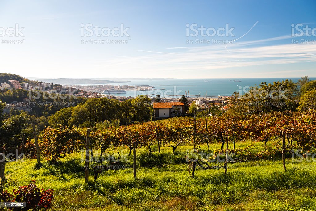 The gulf of trieste in a sunny day stock photo