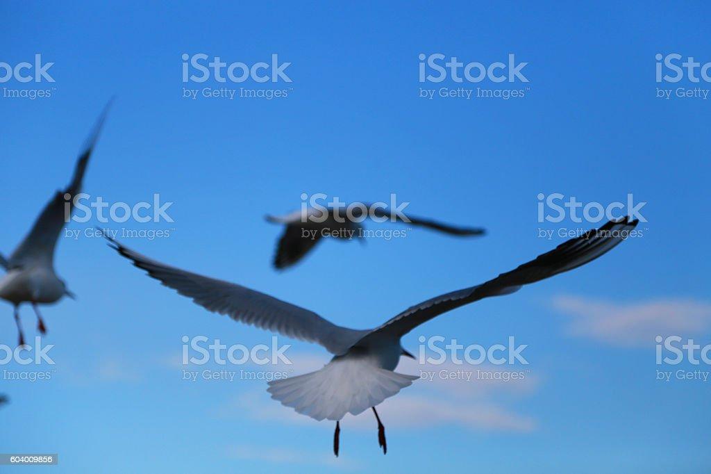 The gull which flies foto de stock libre de derechos