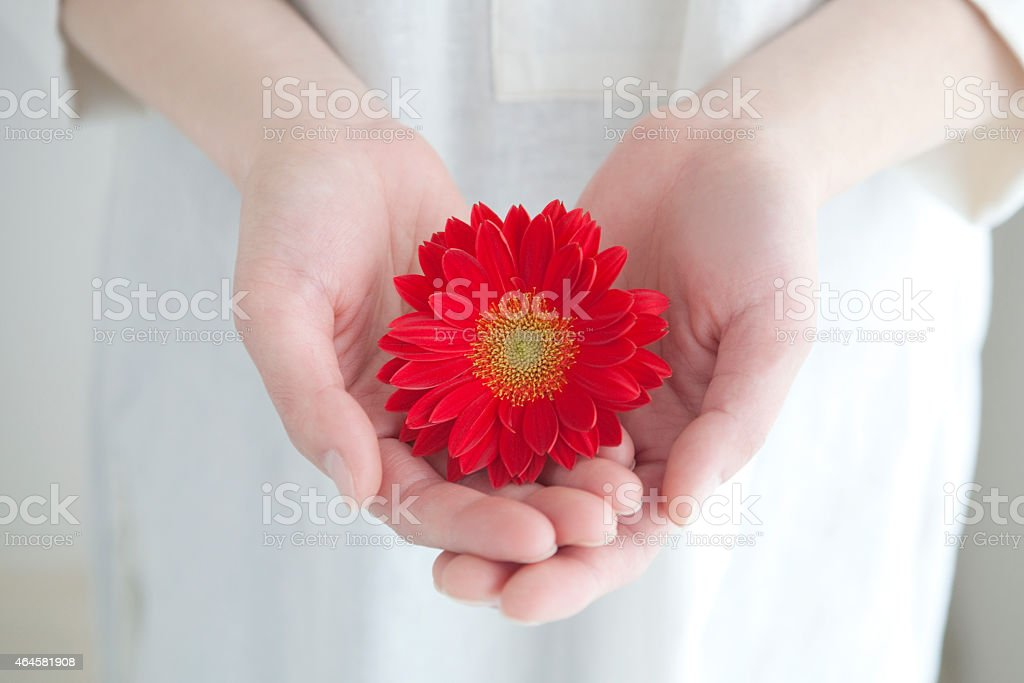 The hands of the women with flowers stock photo
