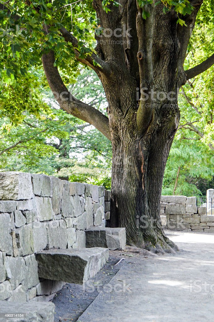 The Hanging Tree stock photo
