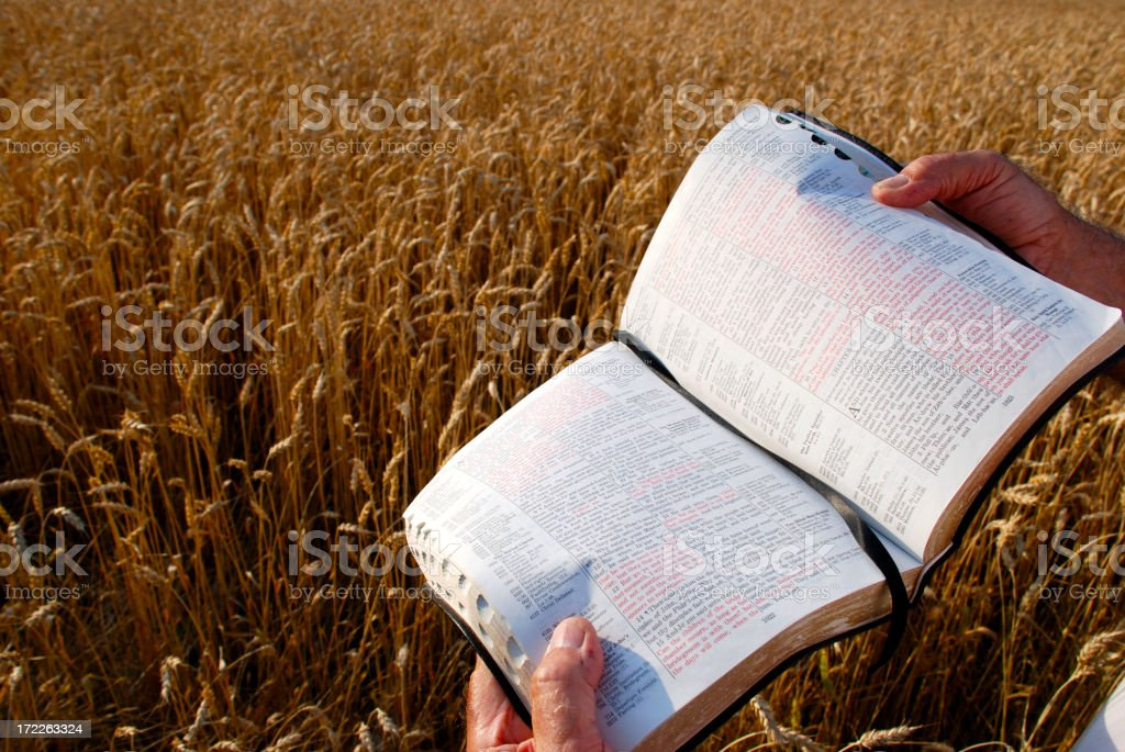 The Harvest Is Ready royalty-free stock photo