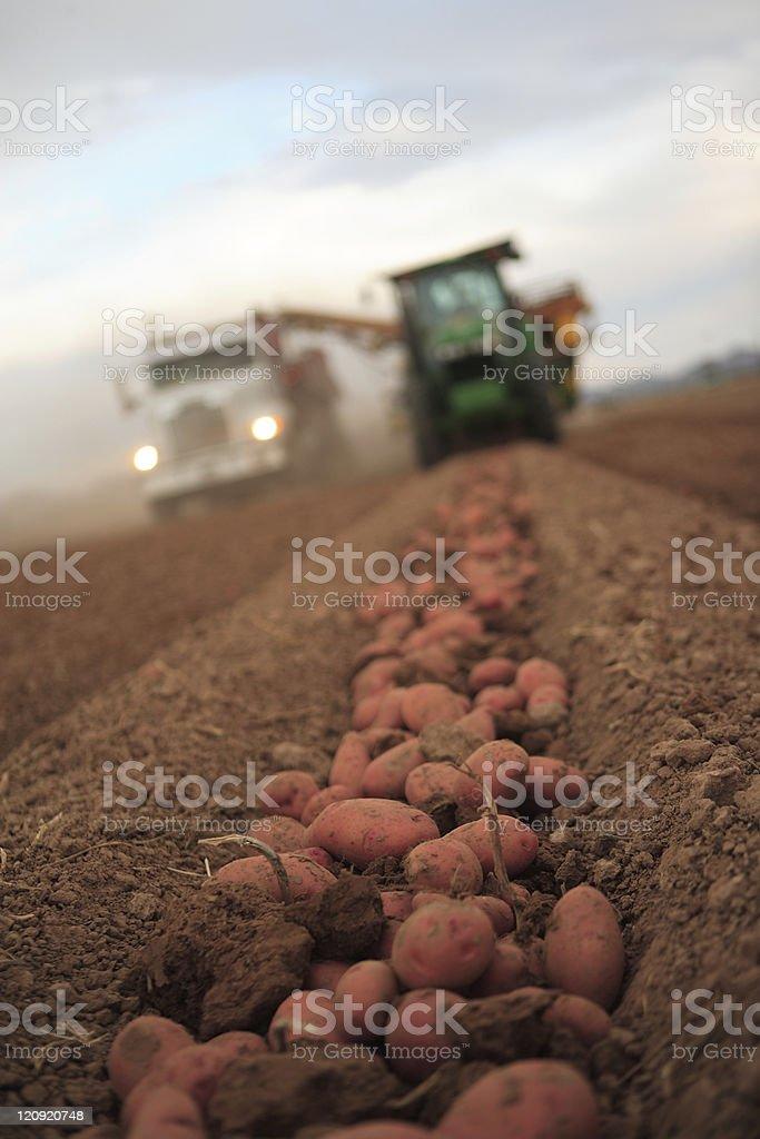 The harvest stock photo
