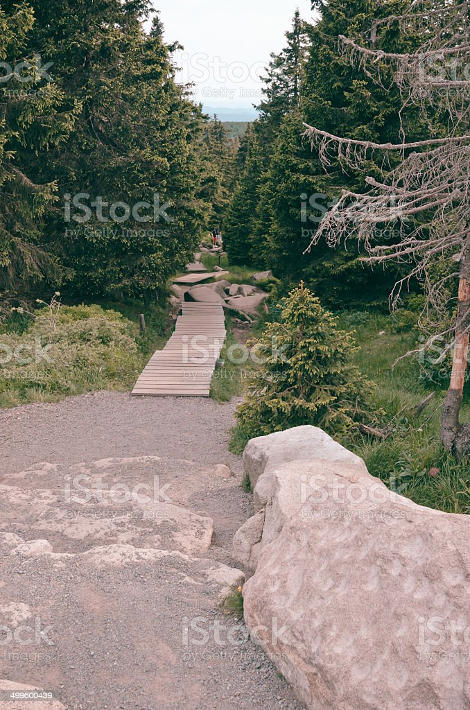 the Harz forest dieback stock photo