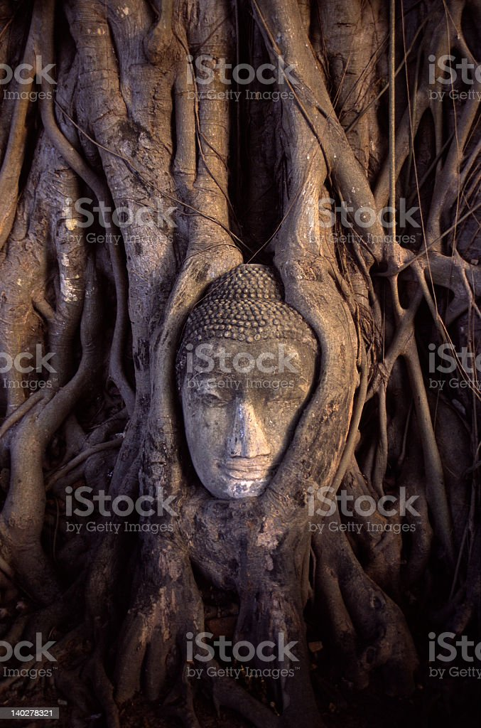 The head of Buddha royalty-free stock photo