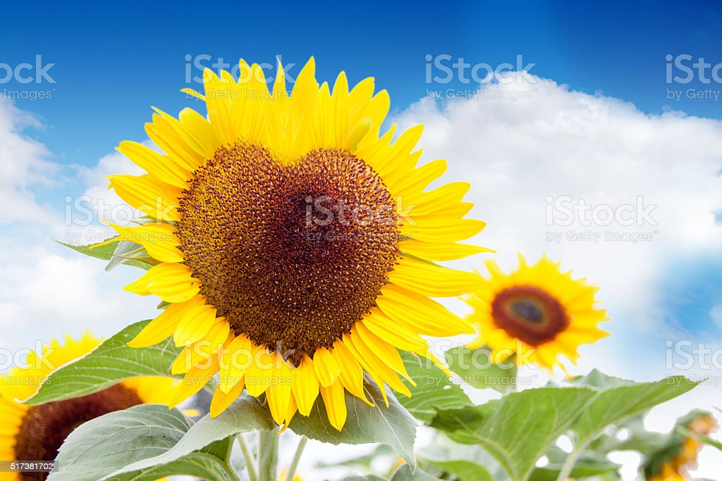 The heart of the sun stock photo