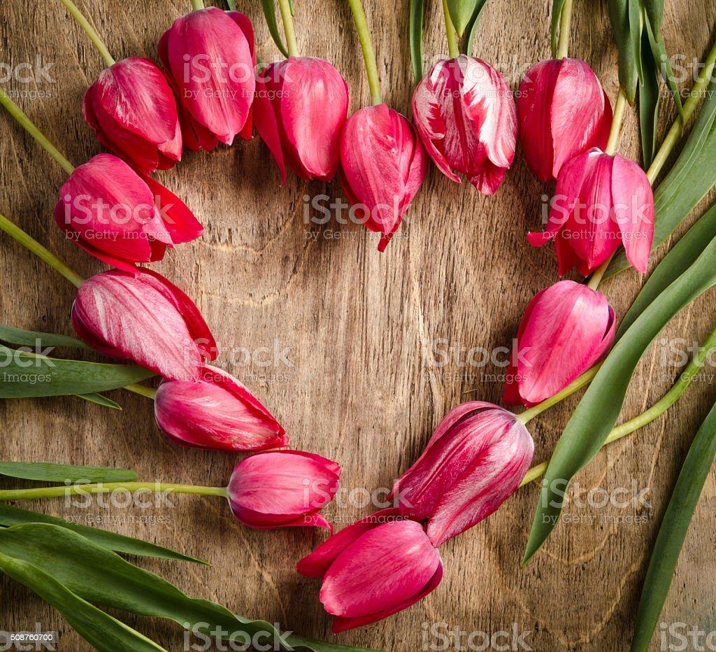 The heart-shaped frame of fresh tulips stock photo