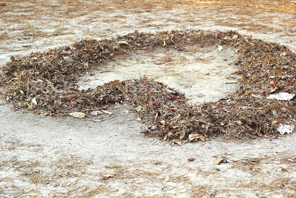 The heart-shaped leaves on the ground. stock photo