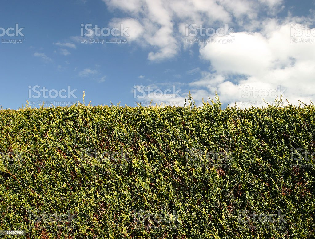 The Hedge royalty-free stock photo
