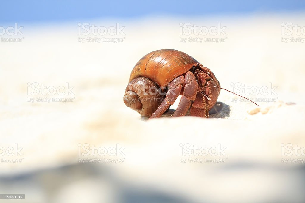 The Hermit Crab on the Beach royalty-free stock photo
