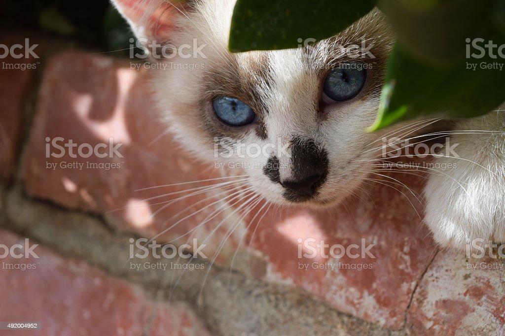 Il gatto nascondersi foto stock royalty-free
