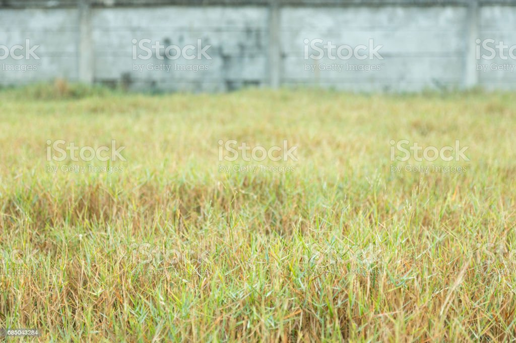 The high grass against concrete wall background stock photo