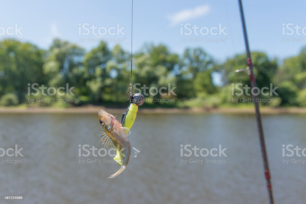 The hooked fish stock photo