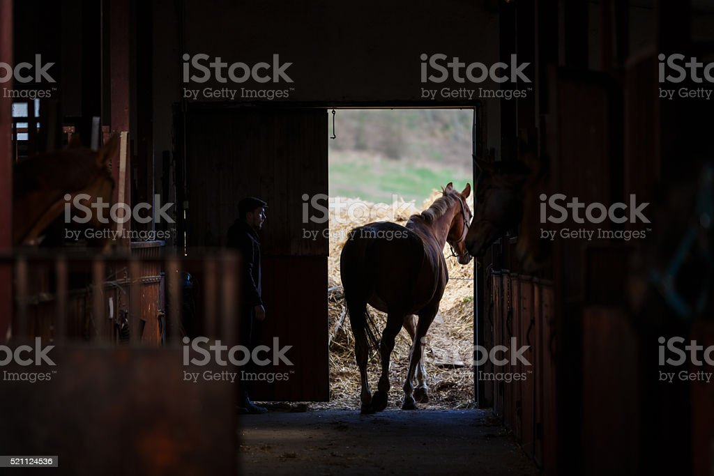 The horse goes for a walk stock photo