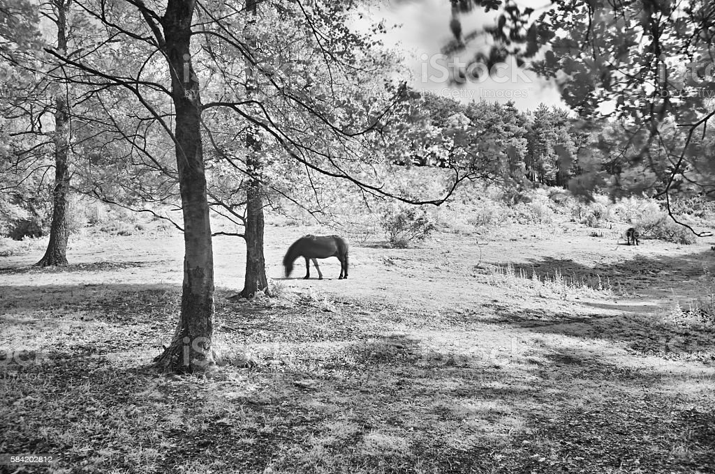 The Horse In Infrared stock photo