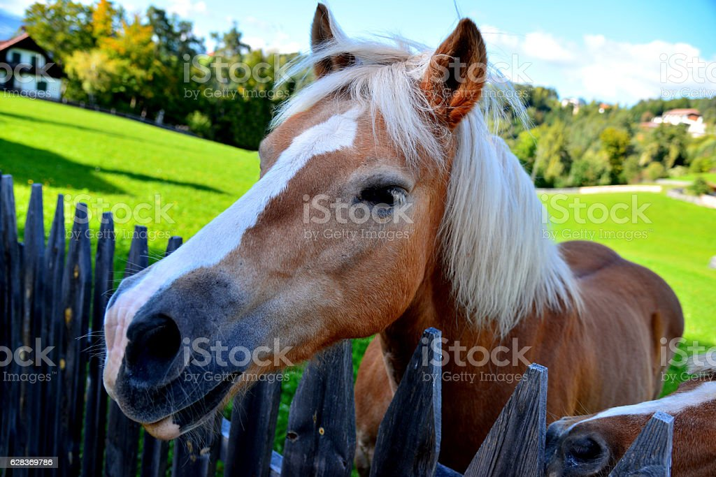 The  horse in village (farm) stock photo