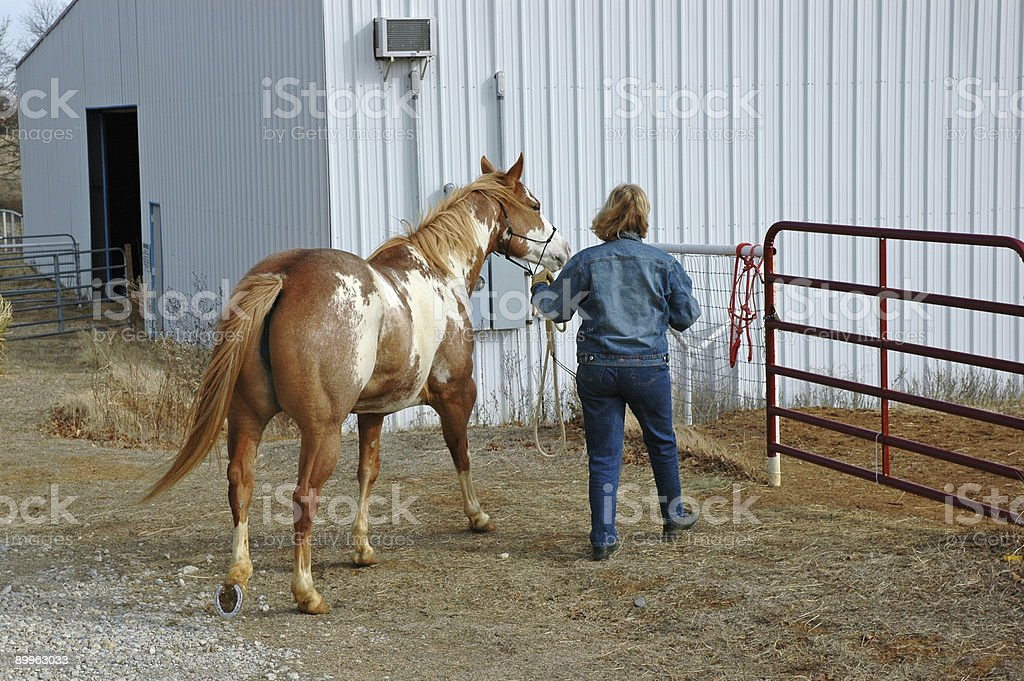 The Horse Walker royalty-free stock photo