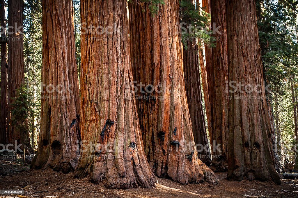 The House, Grove of Giant Sequoias, Sequoia National Park stock photo
