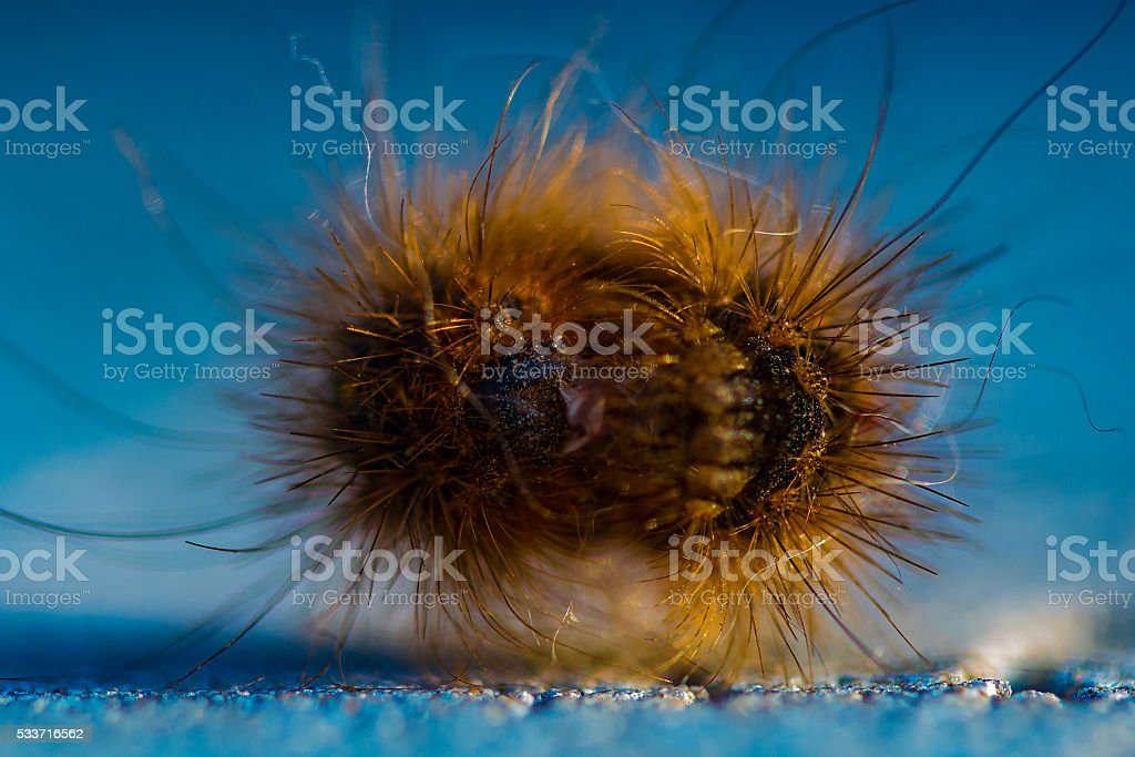 The Hovering Caterpillar stock photo