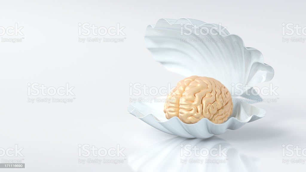 The Human Brain Is A Pearl Of Humanity royalty-free stock photo