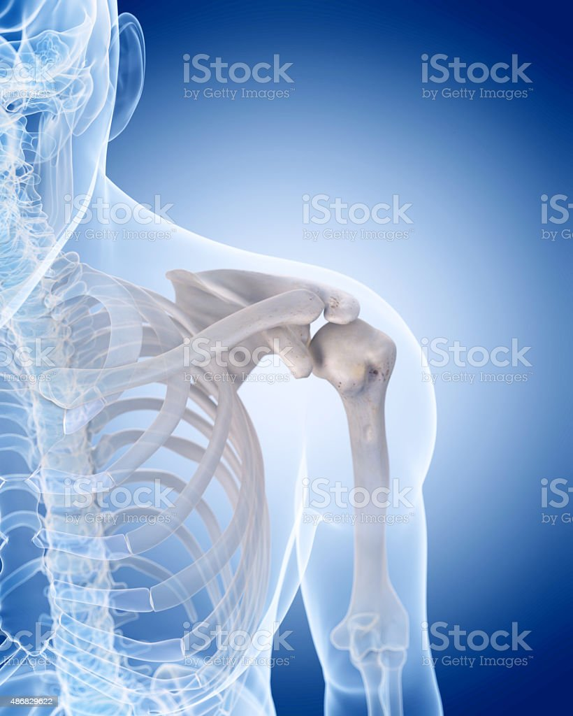 the human skeleton - the shoulder vector art illustration