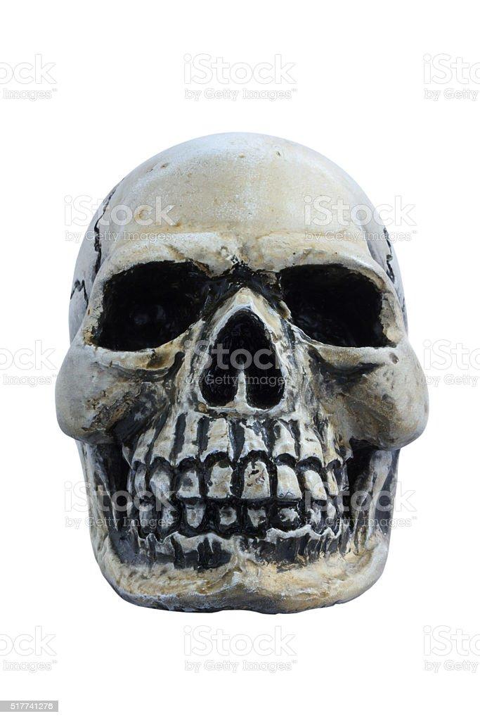 The human skull isolate on white background. stock photo