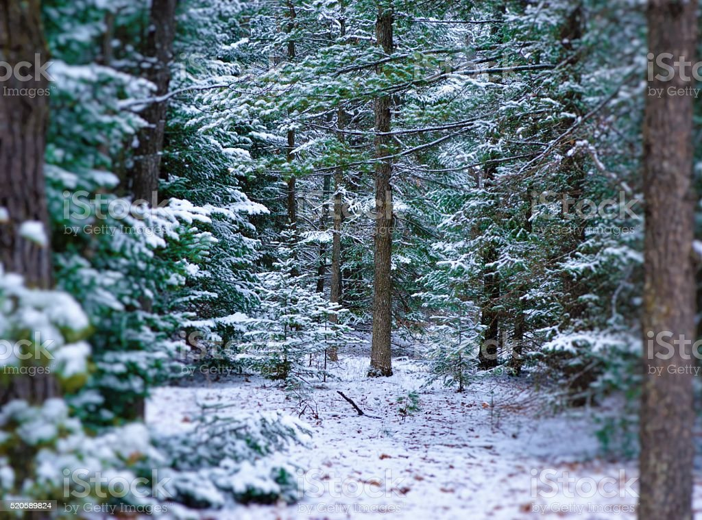 The Huron National Forest in the winter stock photo