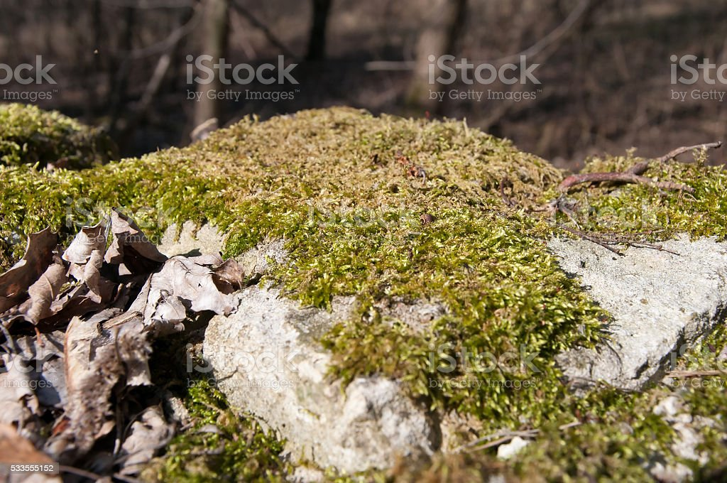 The image of stone with green grass stock photo