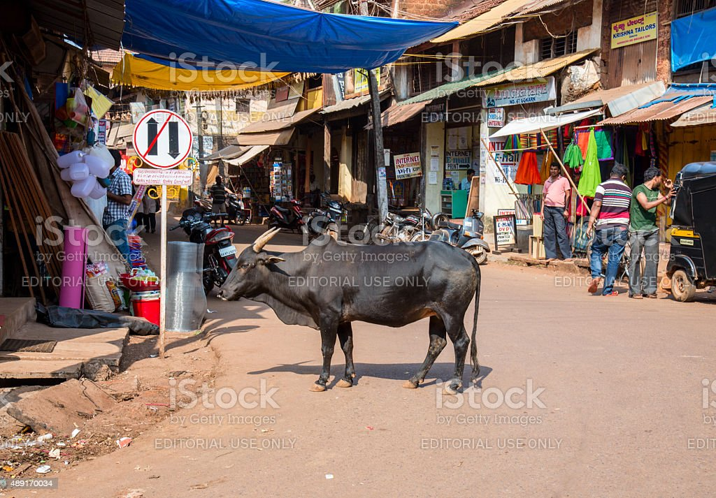 The Indian cow on the street stock photo