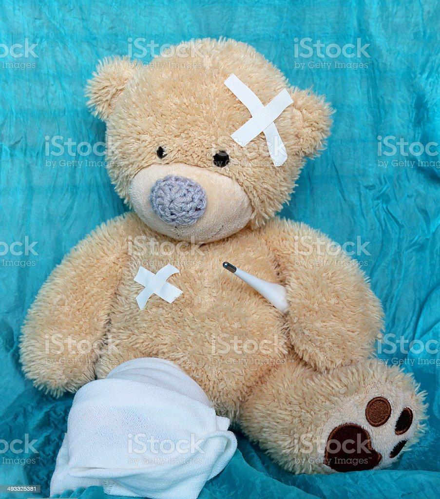 the injured bear stock photo