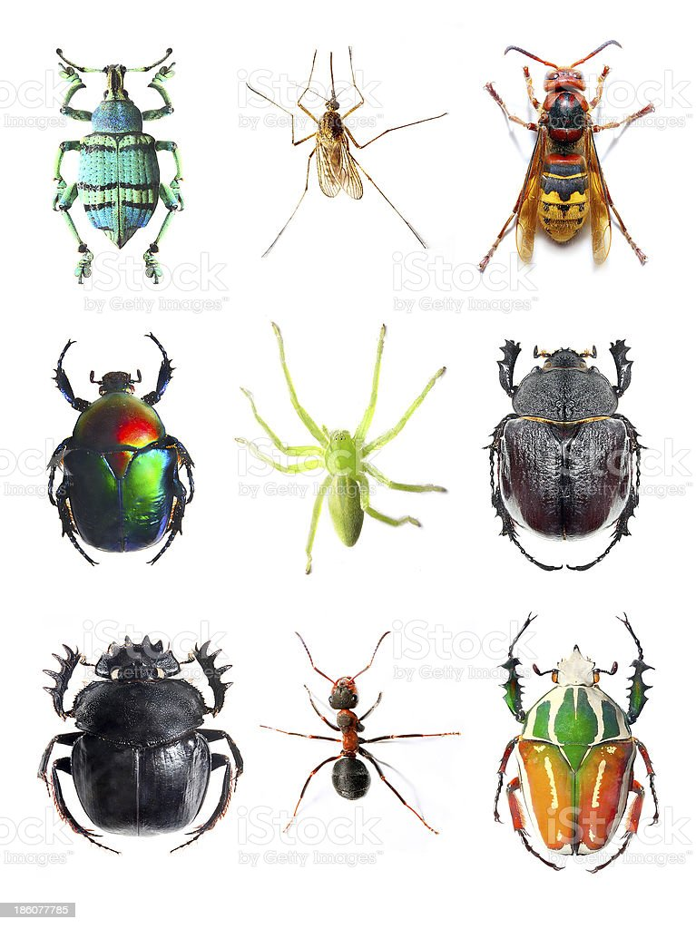 The Insect collection. stock photo