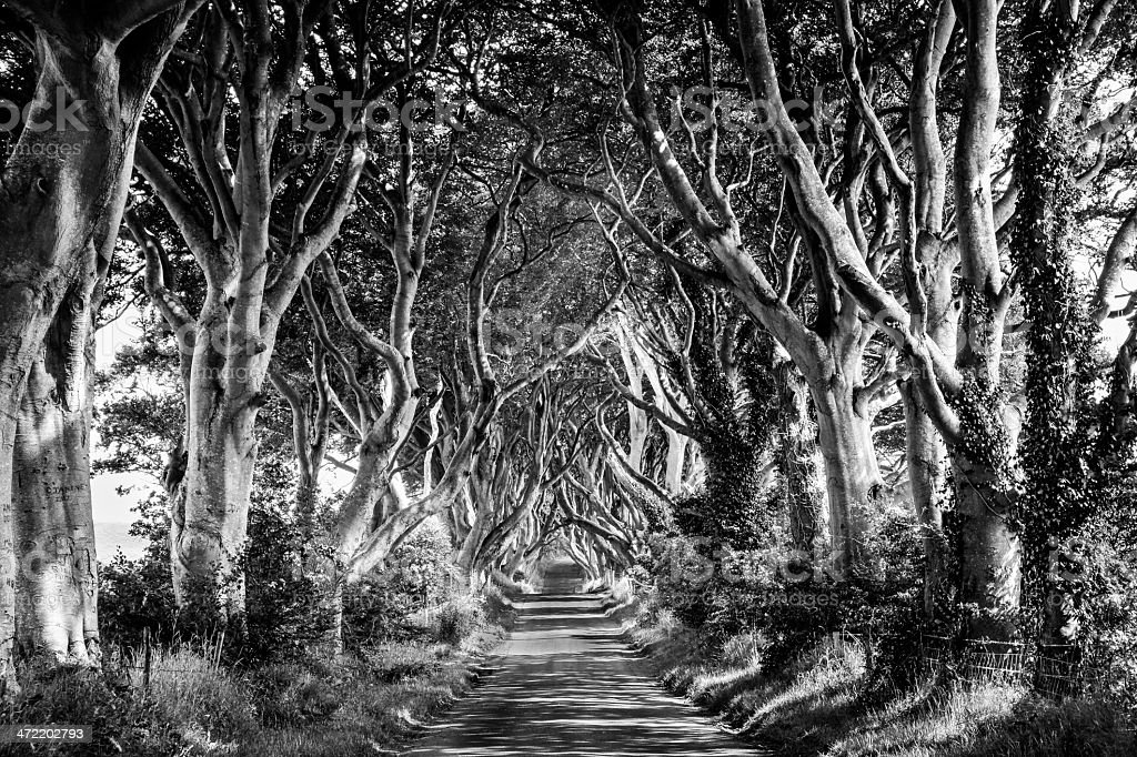 The Irish Dark Hedges stock photo