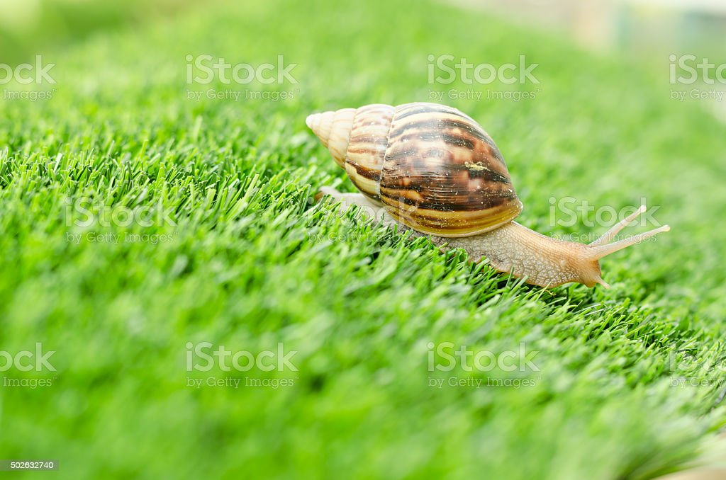 The journey of snail. stock photo