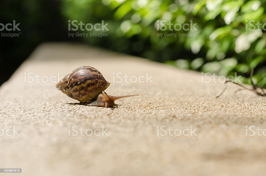 The journey of snails stock photo