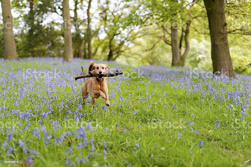 the joys of spring stock photo