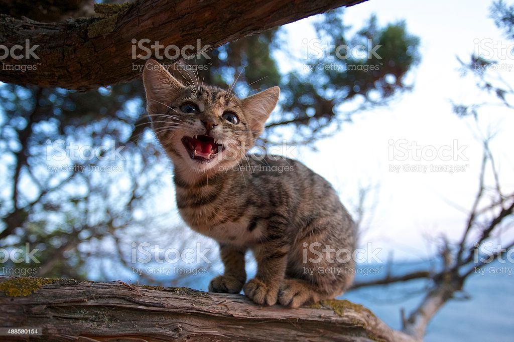The kitten opened his mouth on the tree close-up. stock photo