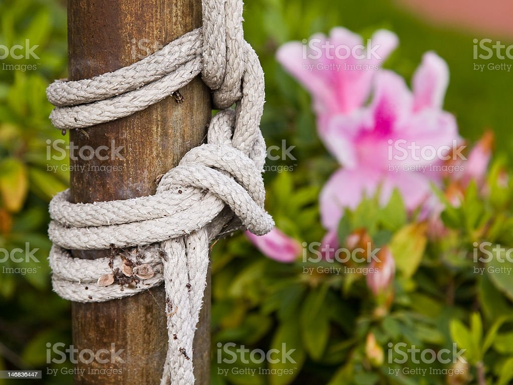 The Knot stock photo
