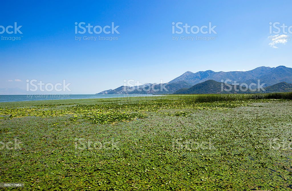 the lake . summertime stock photo