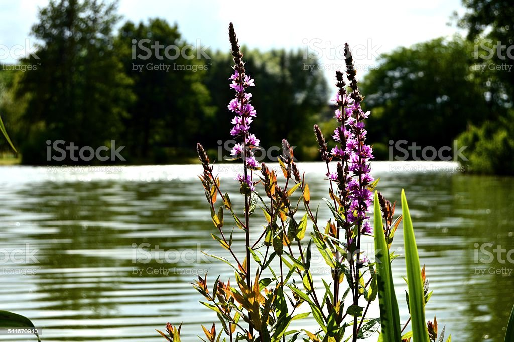 The lakeside stock photo
