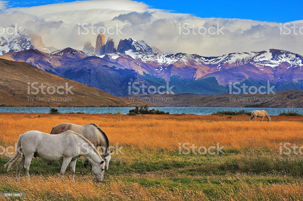 The landscape in park Torres del Paine stock photo