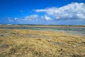 The landscape of Bisezaki, Okinawa, Japan