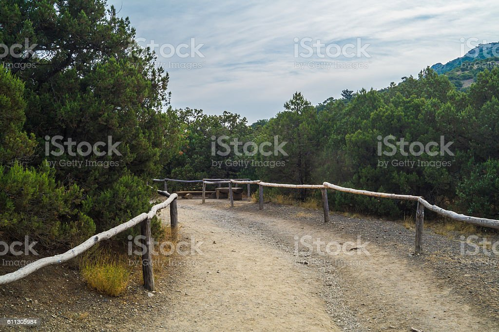 The landscape of juniper trees in the New World stock photo