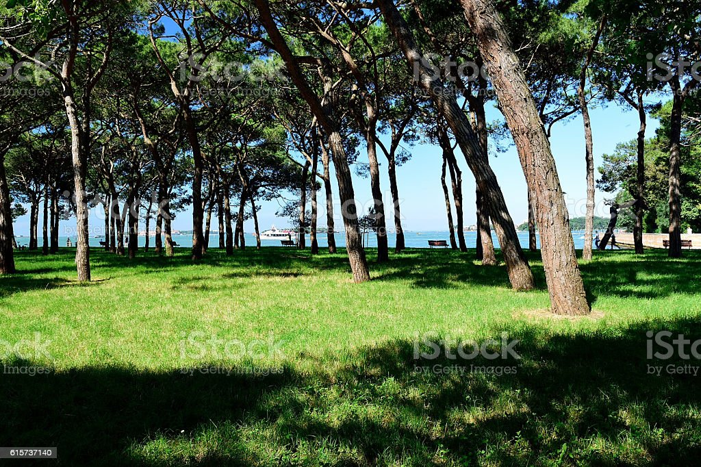 The landscape of the island  St. Helena. stock photo